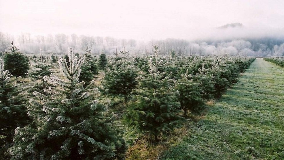 6 Tips For A U-cut Christmas Tree Family Vacation